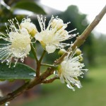 Beautiful Australian bush flowers